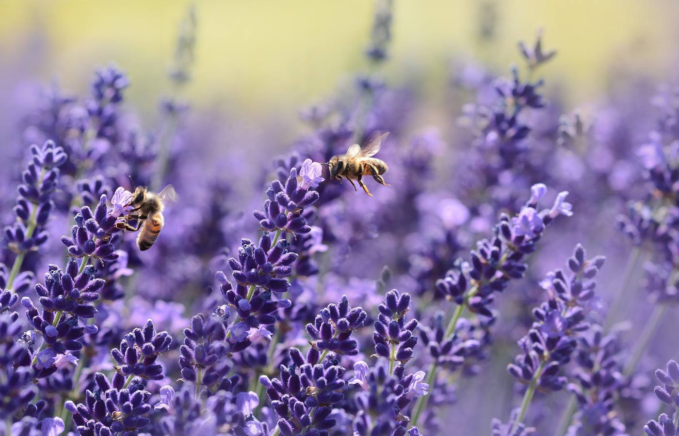 How to Make Your Yard Bee Friendly Using Plants and Flowers