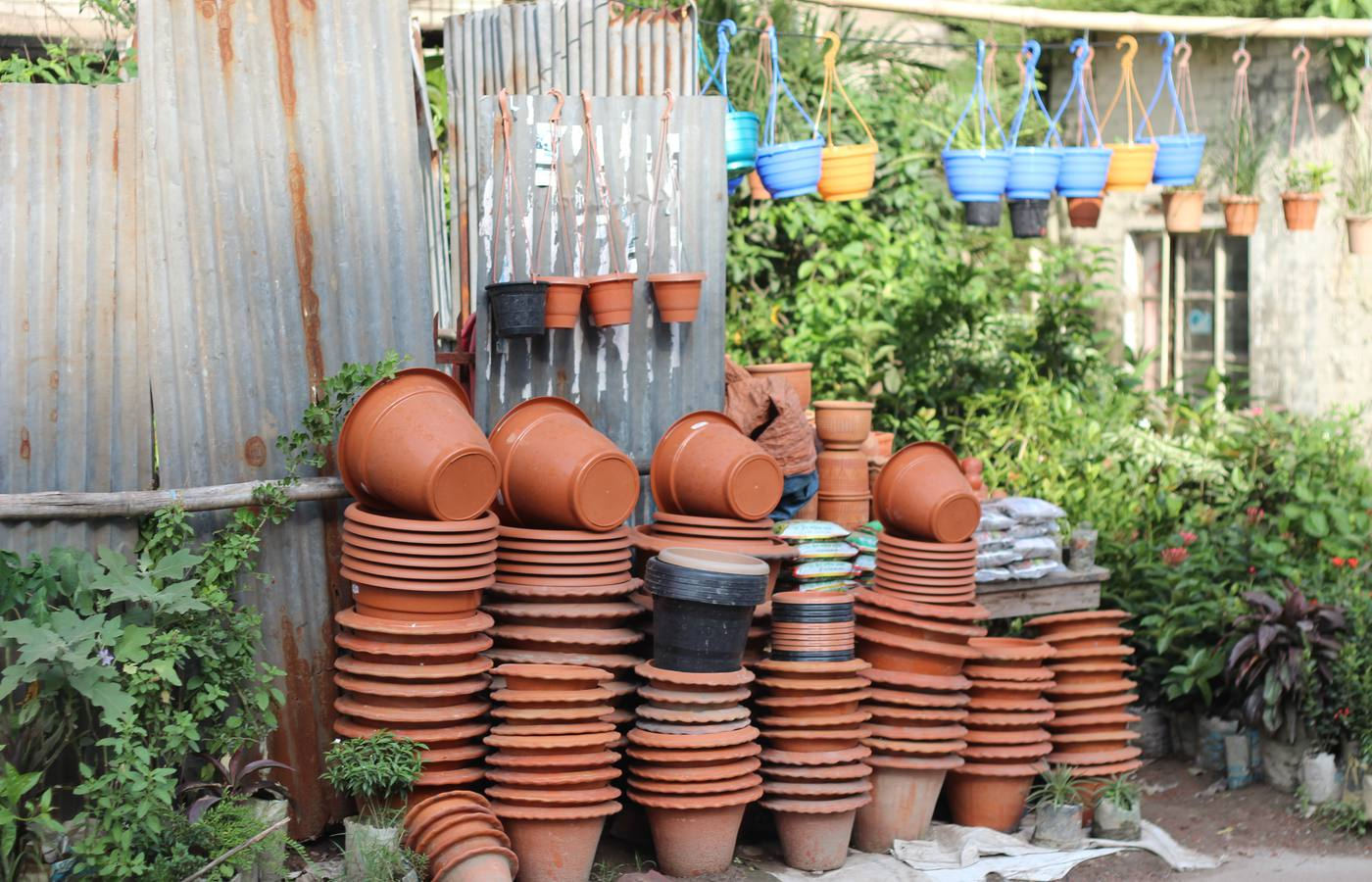 Best Plants for a Container Garden
