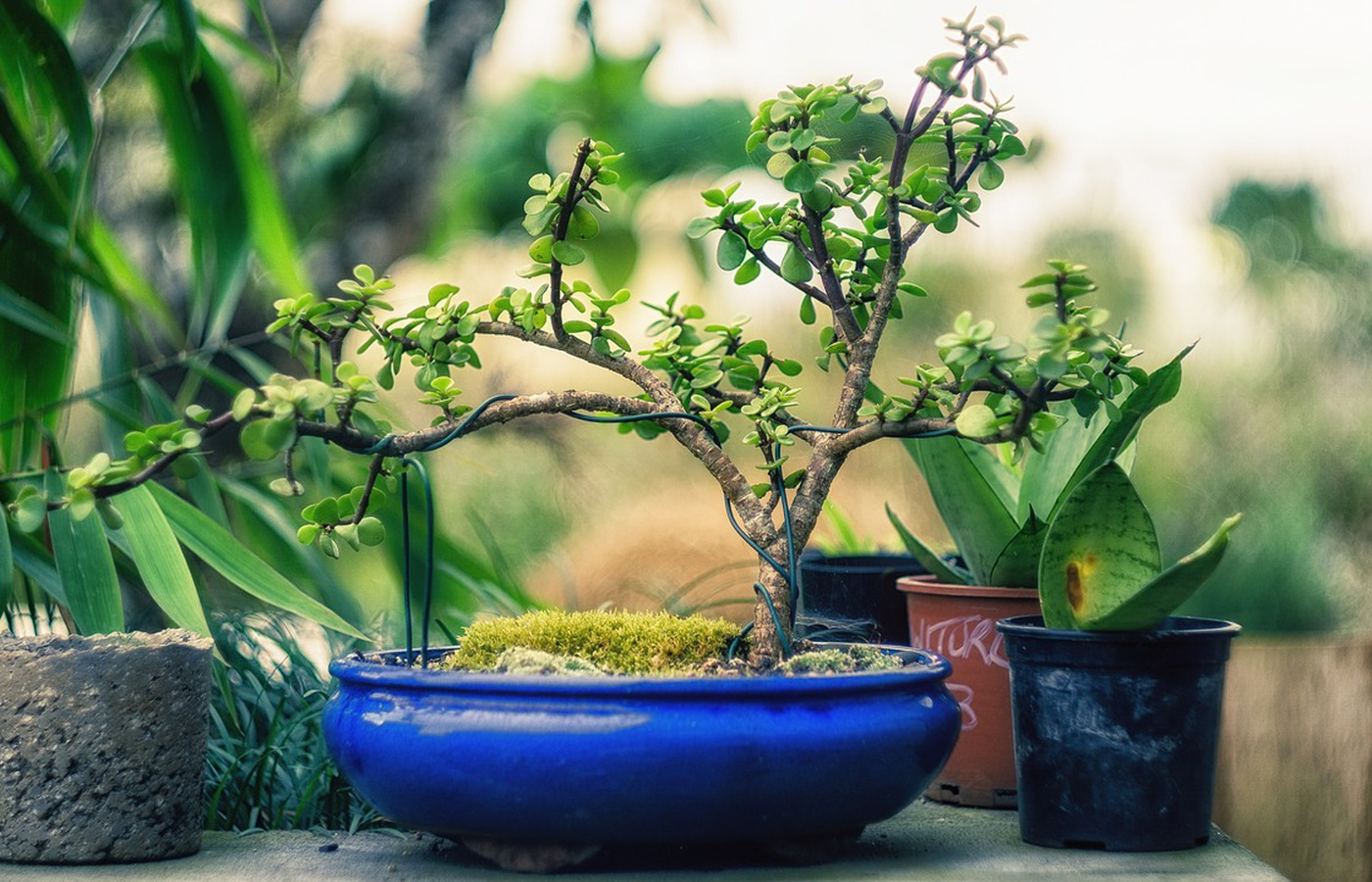 The Most Expensive Bonsai Trees You Can Buy
