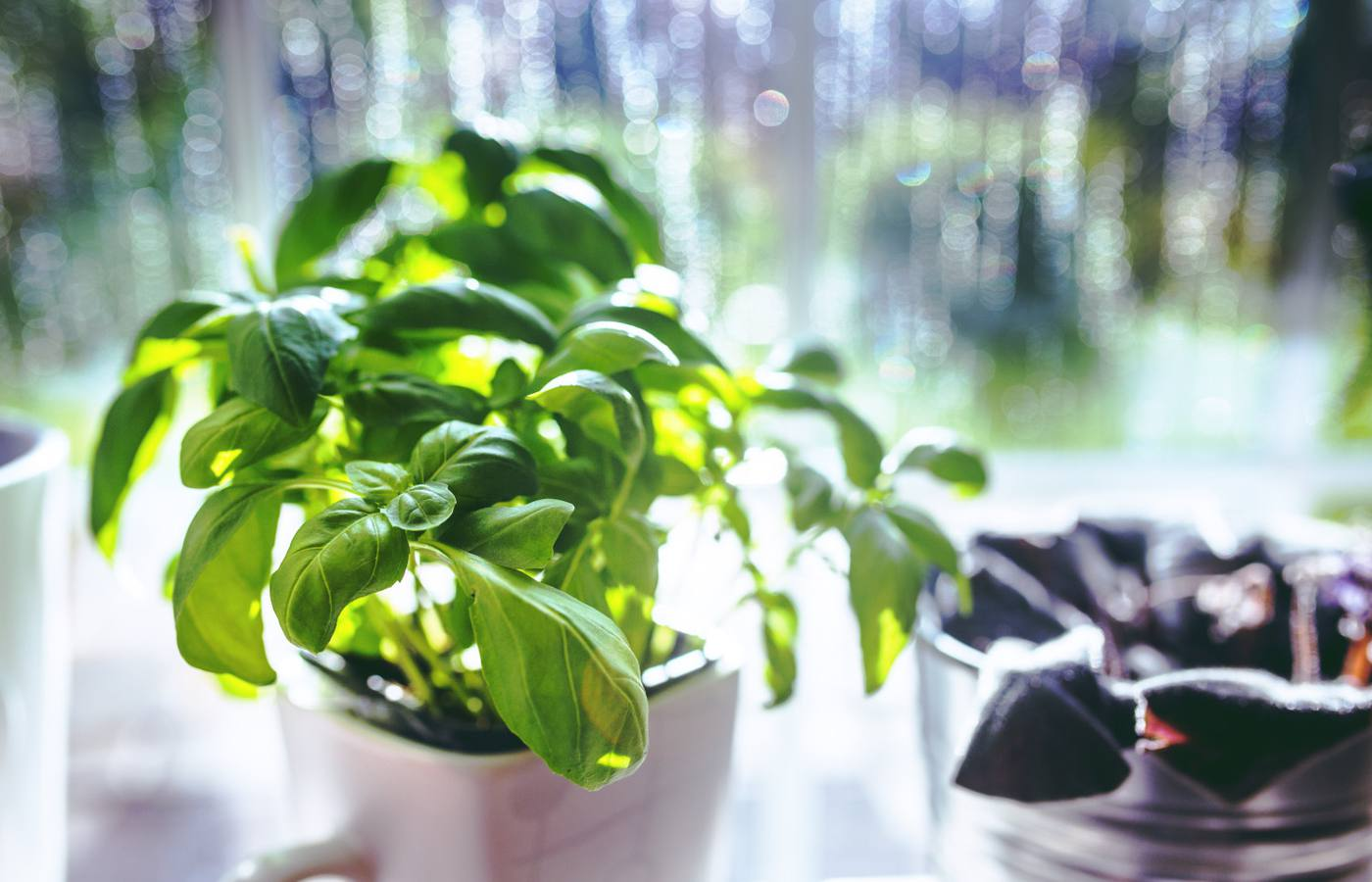 Harvesting and drying your garden's herbs