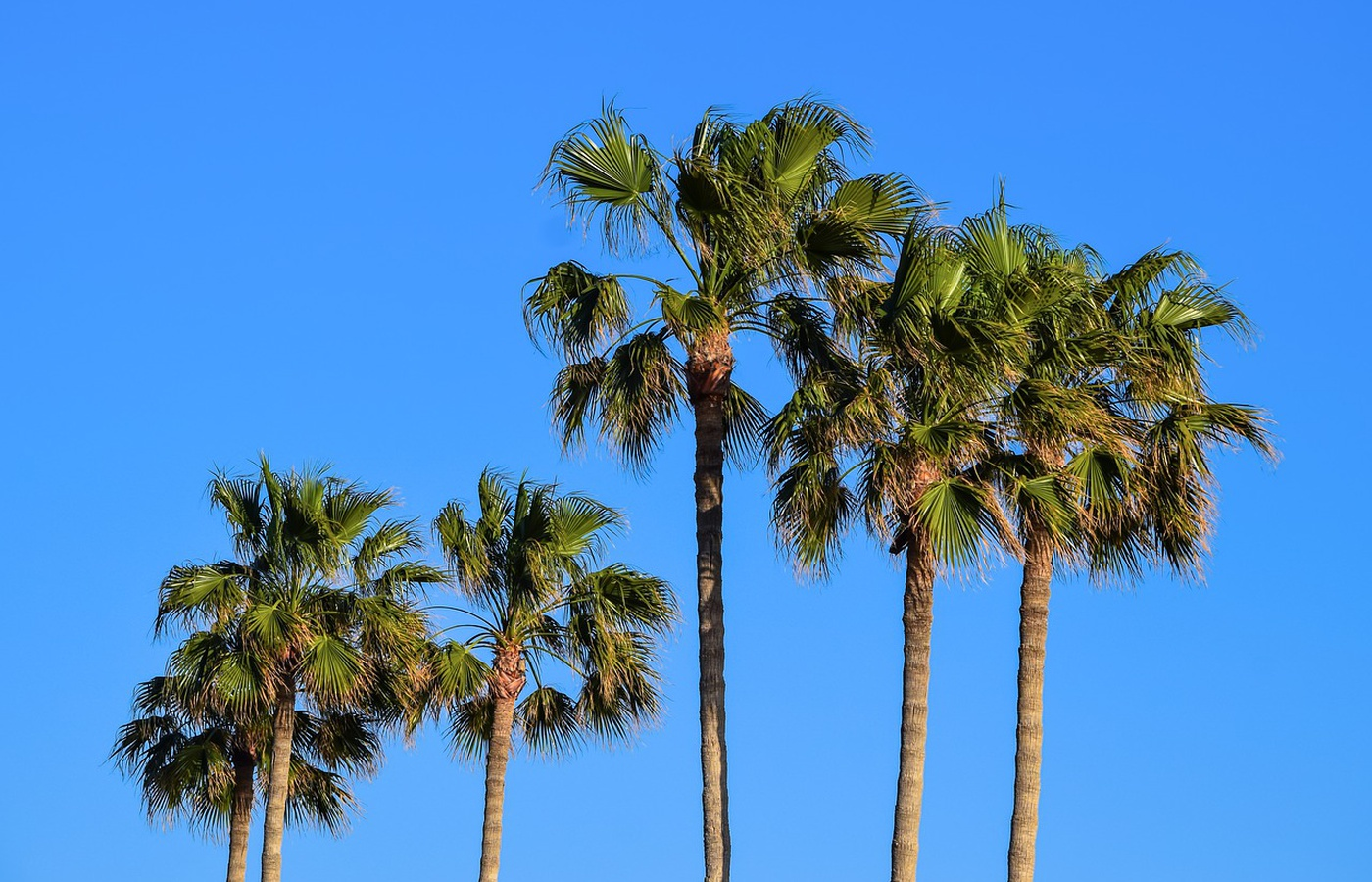 The Most Expensive Palm Tree & Why It's a Real Investment