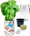 Color & Grow Your Own Indoor Basil Herb Garden!